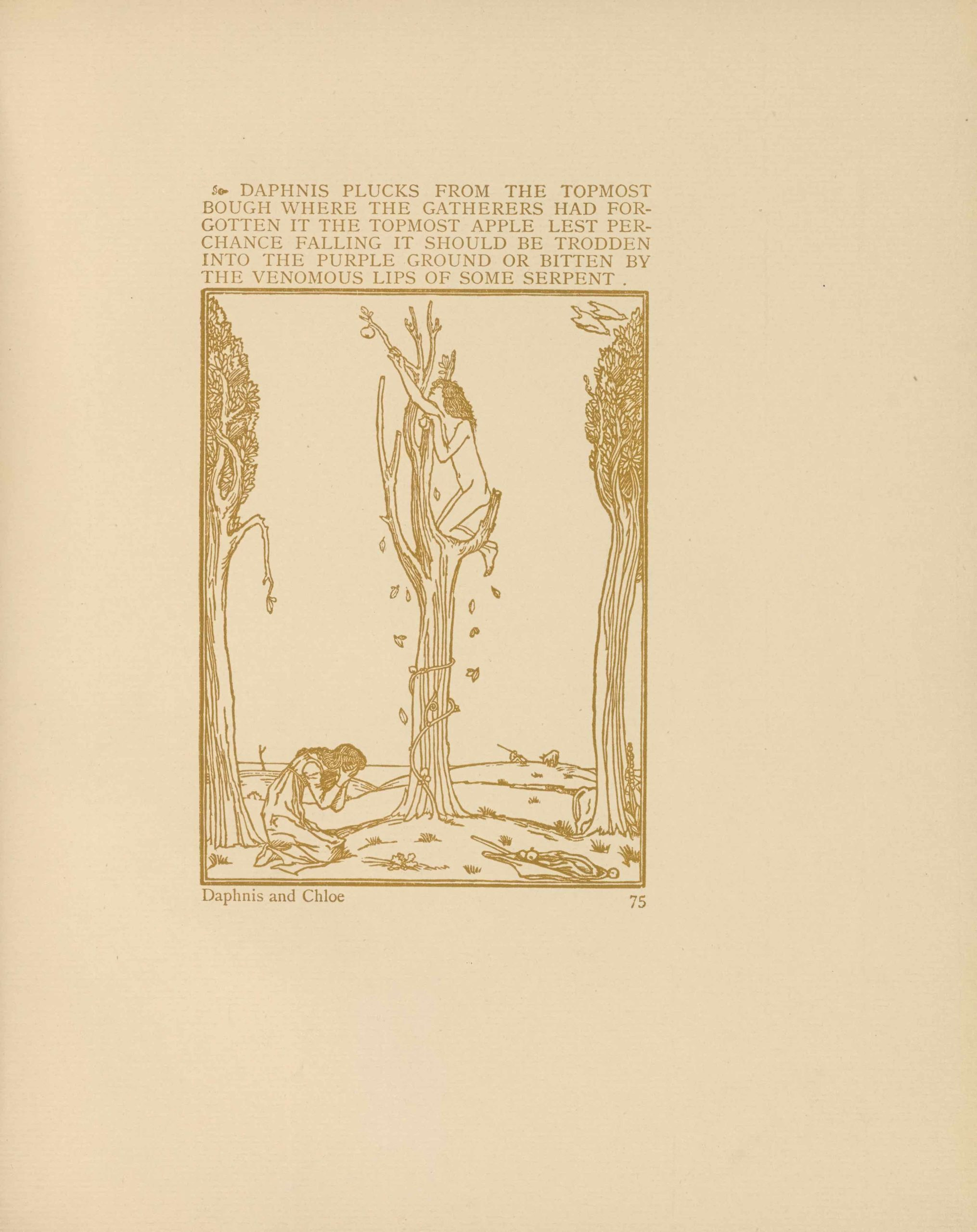 """The wood engraving, an illustration of """"Daphnis and Chloe,"""" is printed in golden brown ink within a                          portrait oriented rectangular double frame. Above the image, printed in the same ink, is typography in all                          caps, preceded by a fleuron: """"Daphnis plucks from the topmost bough where the gatherers had forgotten it the                          topmost apple lest perchance falling it should be trodden into the purpose ground or bitten by the venomous                          lips of some serpent."""" The typography is the same width as the image, beneath which is printed the title                          """"Daphnis and Chloe"""" and the page number 75. Centred in the image is a barren tree in which Daphnis, perched                          on a high branch, reaches out for an apple while Chloe kneels at the base of the tree. Daphnis is nude, with                          long hair that cascades over his shoulder. From the ground, a single vine grows upward and is wrapped around                          the tree. Chloe kneels to the left of the tree, holding her face in her hands. She wears a long dress and shoes.                          In the far right foreground is a crumpled basket or cloth holding apples. Two blooming trees with leafy foliage                          frame either side of the central tree. An animal is half-hidden behind the right tree, with its rear visible.                          In the distant background are hills, with a shepherd and sheep in the distance. At the top of the image, two                          white birds, possibly doves, fly down towards the tree at the right."""