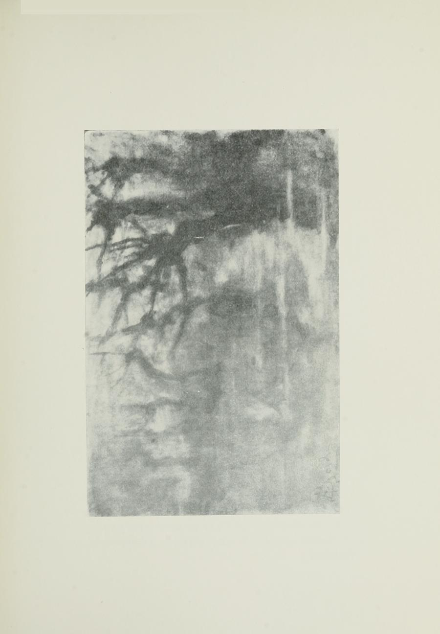 Image is of several leafless trees There is the suggestion of fog and a body of water The image is horizontally displayed
