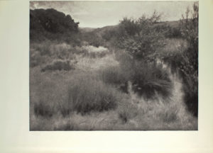 Image is of a grassland or sand dunes In the foreground several clumps of grass and a portion of a tree are visible In the middle ground there is a similar tree shown in full length dividing the image in half vertically There is a forest of dark trees in the background The sky is cloudy and light coloured The image is horizontally displayed